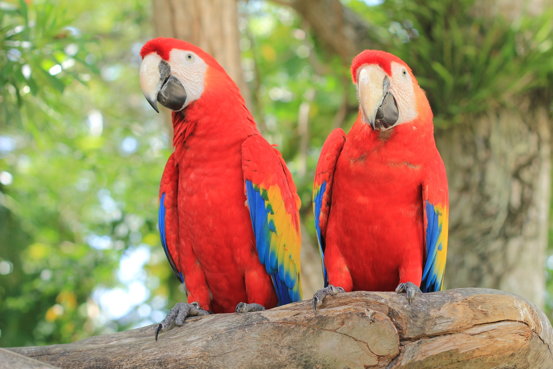 mehhiko-papagoid